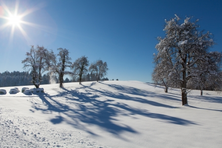 Beautiful winter landscape with snow covered trees Stock Photo - 16828324