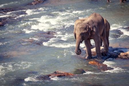 Two Elephants Standing on Rock While Bathing Stock Photo