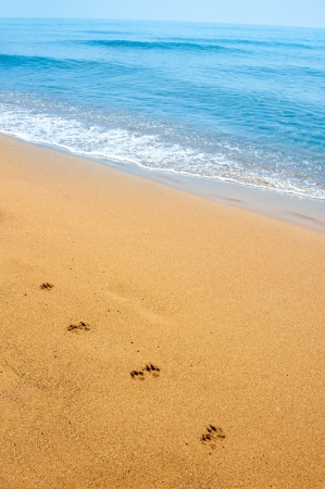 Isolated dog footsteps in sand along the shore, on tropical beach