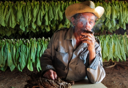 VINALES, CUBA - APRIL 22  Unidentified tobacco farmer smokes home made cigar in his drying shed, in Vinales, on April 22, 2012  Cuba has the second largest area planted with tobacco of all countries world wide
