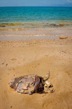 Dead turtle, ecology Stock Photo