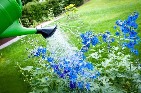 Watering flowers on garden with green watering can