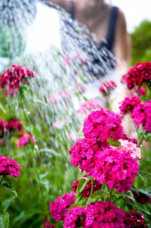 Girl watering purple flowers on a garden