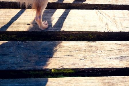Dog paw on wooden bridge, detail