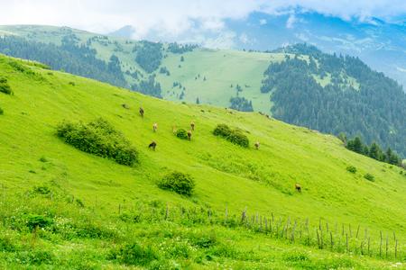 Mistige Plateau Highland met Giresun - Turkije