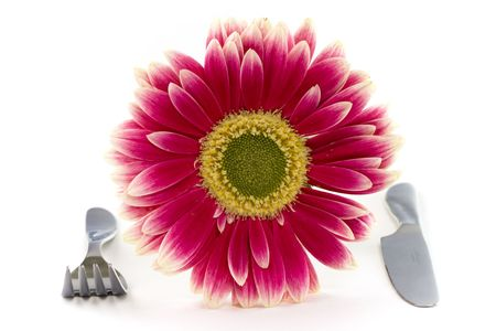 daisy, fork, knife Stock Photo - 640551