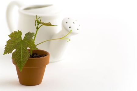 wateringcan: New plant and watering-can