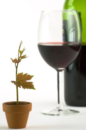 Grapevine in a pot, wine glass and bottle on white background Stock Photo - 991583