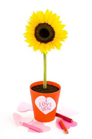 Sunflower in a pot. Paper heart. Isolated on white background photo