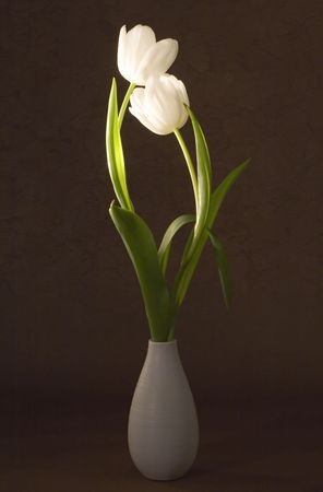 Two beautiful tulips in a vase on artistic background photo