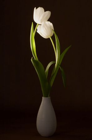 still life: Two beautiful tulips in a vase on artistic background