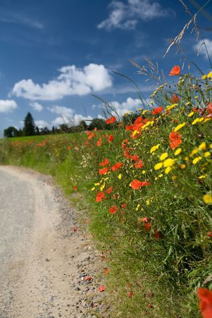 Summer landscape with red poppies at a country road  photo