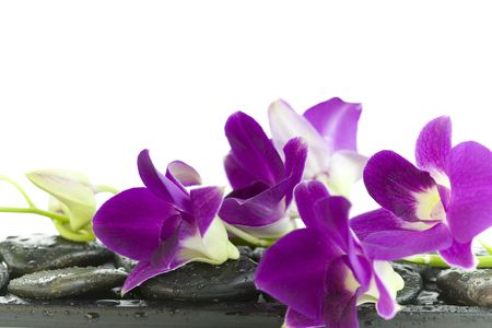 purple orchid: Close up of beautiful purple orchids on massage stones (white background)