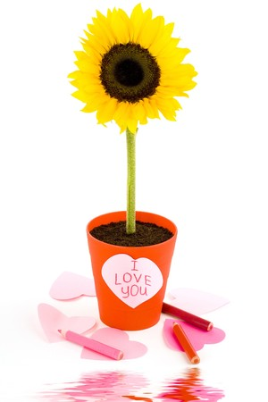 Sunflower in a pot and paper hearts with soft focus reflected in the water photo