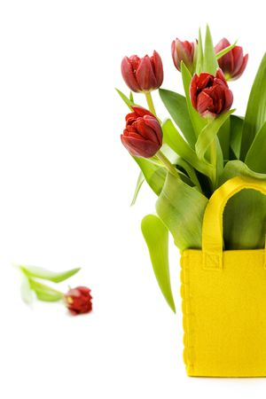 fresh tulips on white background with copyspace photo