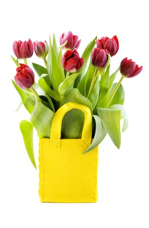 fresh tulips on white background photo