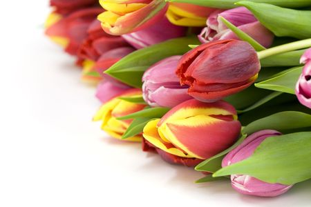 compliment: bouquet of the fresh tulips on white background
