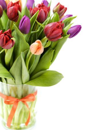 gentile: fresh tulips on white background