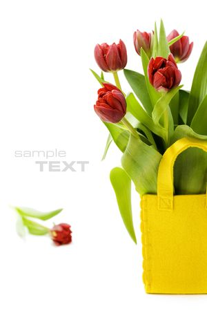 fresh tulips on white background with copyspace (with sample text) photo
