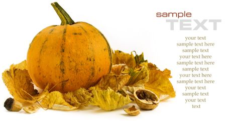 Pumpkins still life on white background (with sample text) photo