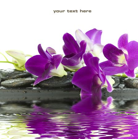 Close up of beautiful purple orchids on massage stones (white background) with soft focus reflected in the water. With sample text photo