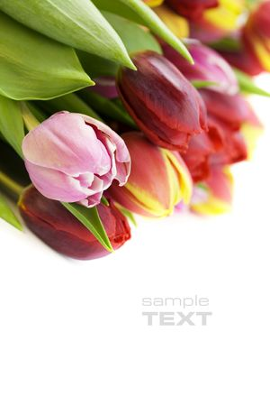 bouquet of the fresh tulips on white background. With sample text Stock Photo - 5913386