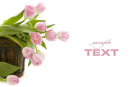 Tulips in the basket on white background. With sample text photo