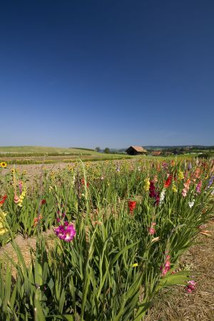 Rows of flowers and Beautiful summer landscape (France) Stock Photo - 6143715