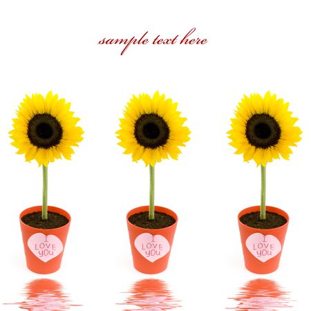 Sunflowers in pots and paper hearts with soft focus reflected in the water. With sample text photo