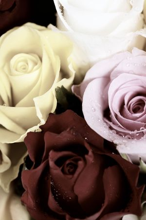 Bunch of multi-colored roses packed tightly together    photo