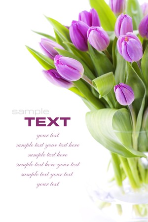 gentile: Pink tulips on white background (with sample text)