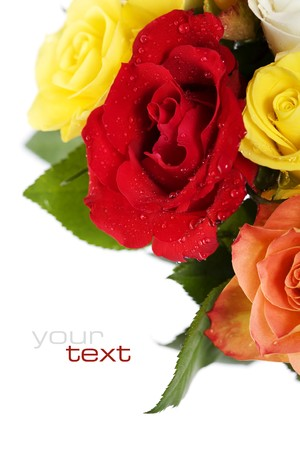 Bunch of multi-colored roses over white. Selective focus  (with sample text) photo