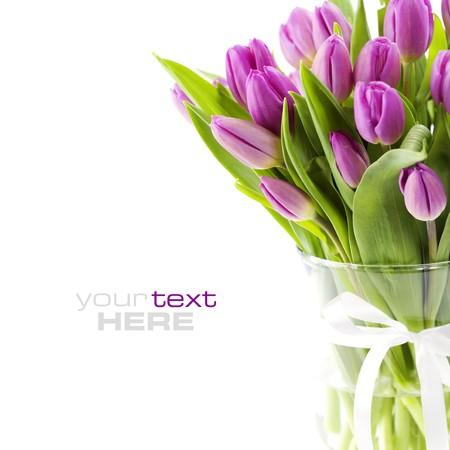 Roze tulpen op witte achtergrond (met voorbeeld tekst)  Stockfoto