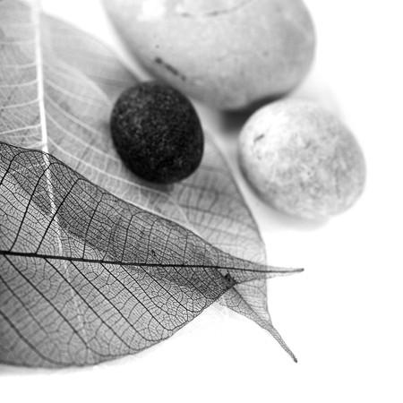 zen stones and skeleton leaves over white (black and white image) photo