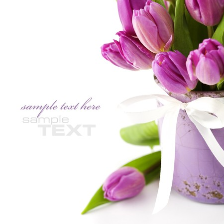 saint valentine   s day: Pink tulips on white background (with sample text)