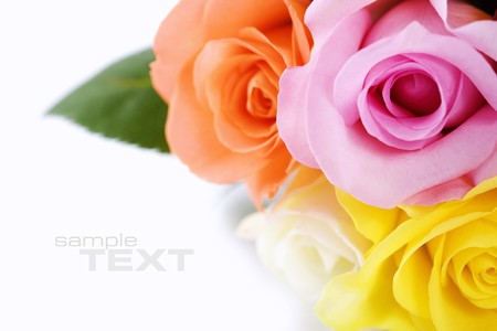 Bunch of multi-colored roses over white. Selective focus photo