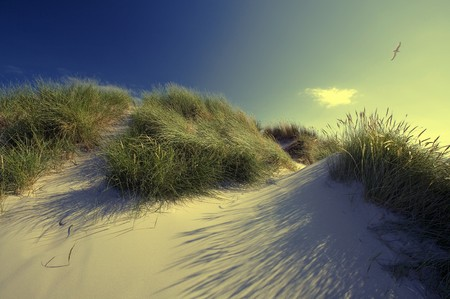 Sand dunes in the Holland desert 版權商用圖片 - 7548116