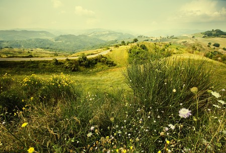 mountain meadow: Alpine meadow wild flowers mountains