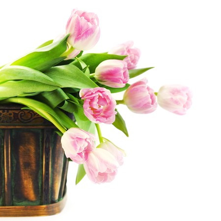 Tulips in the basket on white background photo