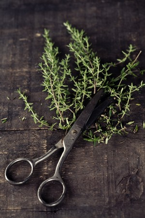 antique scissors: Fresh Thyme  and scissors on the old kitchen table