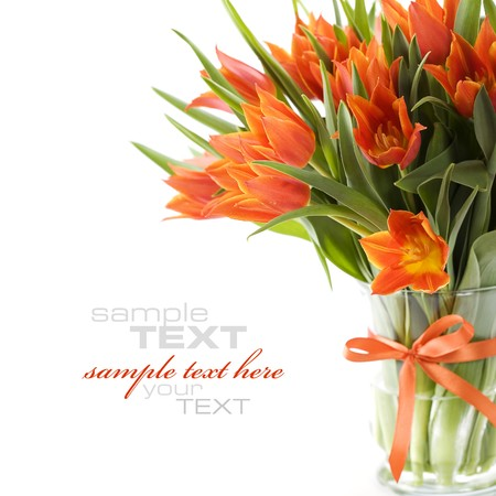 stalk flowers: Orange tulips on white background (with sample text)