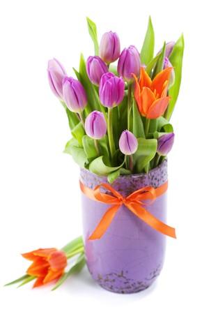gentile: Pink and orange tulips on white background Stock Photo