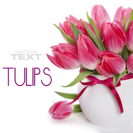 white tulip: Beautiful pink tulips in a vase on a white background (with sample text) Stock Photo