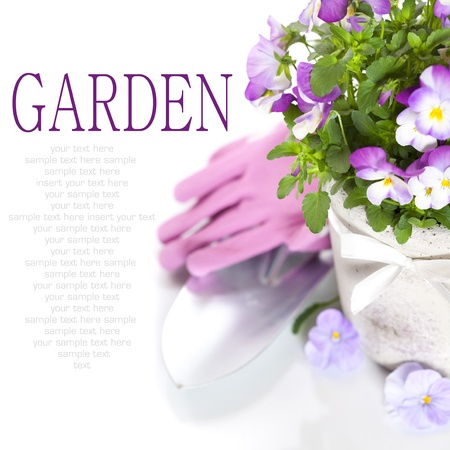 fresh viola flowers in a pot, gardening gloves and shovel over white with sample text