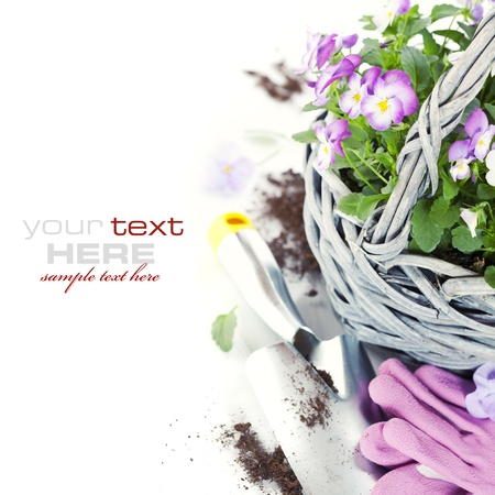 fresh viola flowers in a basket, gardening gloves and shovel over white with sample text photo