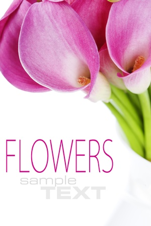 white lilly: Beautiful pink calla lilies on white background Stock Photo