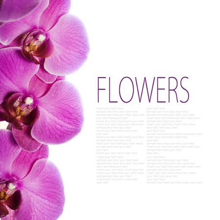 Fresh orchids over white background with sample text photo