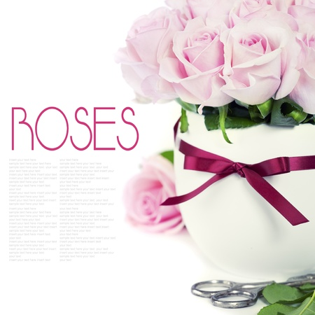 bouquet of pink roses in a pot on the white background photo