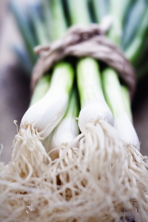 gastro: Green Onion close up shoot Stock Photo