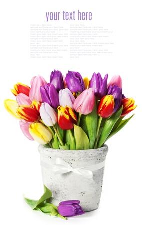 mazzo di fiori: tulipani primaverili su sfondo bianco (con testo di esempio)